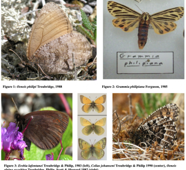 Alaska Lepidoptera Survey: History and Future of the KWP Lepidoptera Collection